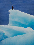 Bald Eagle on an Iceberg in Tracy Arm  Alaska  USA