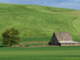 Barn near St John  Palouse  Washington  USA