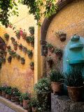 Flowers and Architecture in San Miguel de Allende  Mexico
