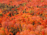 Fall Colors  Northwoods  Minnesota  USA