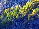 Dallas Divide  Uncompahgre National Forest  Colorado  USA