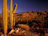 Landscape of Saguaro National Monument  Arizona  USA