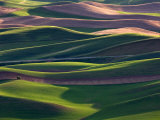Scene at Dawn from Steptoe Butte  Palouse  Washington  USA