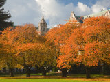 Quad in Autumn  University of Washington  Seattle  Washington  USA