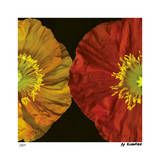 Red & Yellow Poppy II