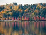 Autumn at Green Lake  Seattle  Washington  USA