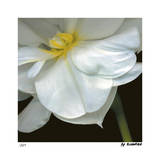 O&#39;Keeffe Jonquil