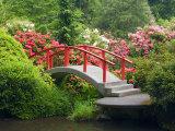 Moon Bridge and Blossoming Rhododendrons  Kubota Garden  Seattle  Washington  USA