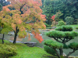 Autumn Color at the Japanese Garden  Washington Park Arboretum  Seattle  Washington  USA
