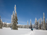 Cross Country Skiing after Snowstorm at Barn Flats  Mt Rainier National Park  Washington  USA