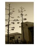 Sedona Series - Desert City
