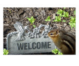 Welcome Chipmunk