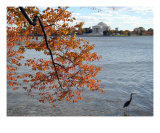 Fall Foliage Around Thomas Jefferson Memorial No-8