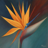 Bird of Paradise I