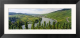Vineyards Along Moselle River  Mosel-Saar-Ruwer  Germany