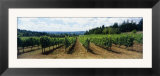 Vineyard on a Landscape  Adelsheim Vineyard  Newberg  Willamette Valley  Oregon  USA
