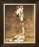 Giraffe  First Kiss