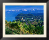 Castle and Vines  Spiez  Switzerland