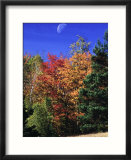 Autumn Trees with Moon  Vermont