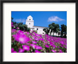 Flowerbed and Junipero Serra Museum  Presidio Park  Old Town  San Diego  United States of America