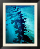 Aerial of Coral Formations  Shark Bay  Australia
