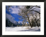 Trees and Mountains  Winter  Yosemite Valley  USA