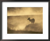 Elk, Framed Art Posters and Prints at Art.