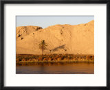 Palm Tree on the Bank of the Nile River  Egypt