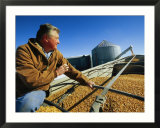 A Farmer Watches as His Corn is Augered into a Grain Truck