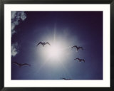 Gulls silhouetted against the sun