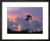 A palm tree silhouetted against a colorful Cuban sunset