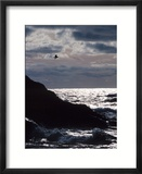 Silhouette of Seagull Flying Over Scenic Rocks and Water