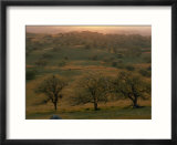 Rolling Foothills of the Sierra Nevada Spotted with Oak Trees near Bakersfield  California
