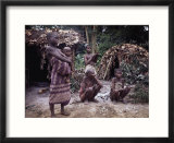 Mbnti Pygmies and Their Forest Huts  Ituri Rain Forest  Northern Zaire  Zaire  Africa