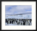 Colony of Emperor Penguins (Aptenodytes Forsteri)  Snow Hill Island  Weddell Sea  Antarctica