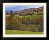 Autumn Tree Colors and Lone Horse in the Green Mountains  Vermont  USA