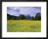Meadow  Flowers on a Meadow  Bad Toelz  Bayern  Germany