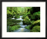 Stream and Mossy Boulders  Scotland