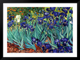 Irises  Saint-Remy  c1889