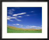 Spring Geen Fields  Palouse  Washington  USA