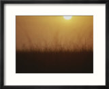 Sunset over grasses in the Everglades