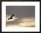 Flying seagull in silhouette