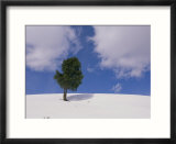 A lone whitebark pine tree on a snowy hill