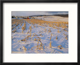 Corn stubble in a wintery Pennsylvania landscape