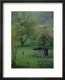 Cyclist Rides Past an Old Barn and Fruit Trees in a Spring Rain