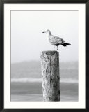 White Seagull on Post  Cape Cod