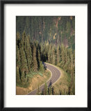 View of Road near Hurricane Ridge  Olympic Peninsula  Washington  USA