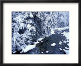 Fresh Snow on Denny Creek  Seattle  Washington  USA