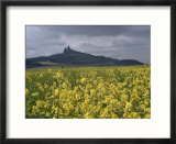 View Across Field of Flowering Mustard to the Ruins of Trosky Castle  Czechoslovakia