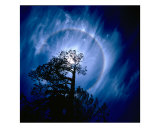 Planet Bluish Tree